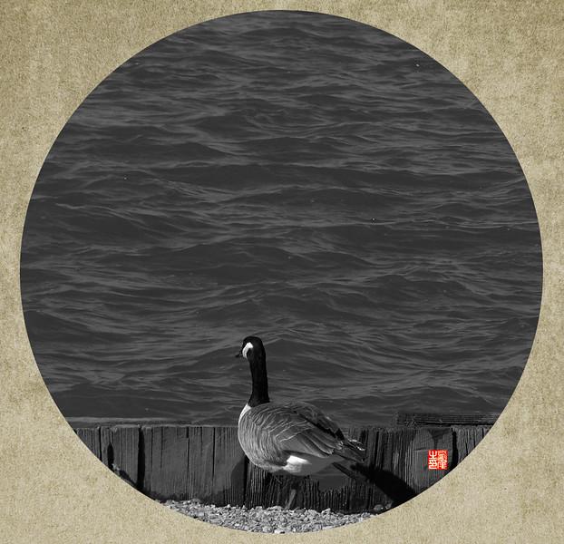 鸟-1.jpg