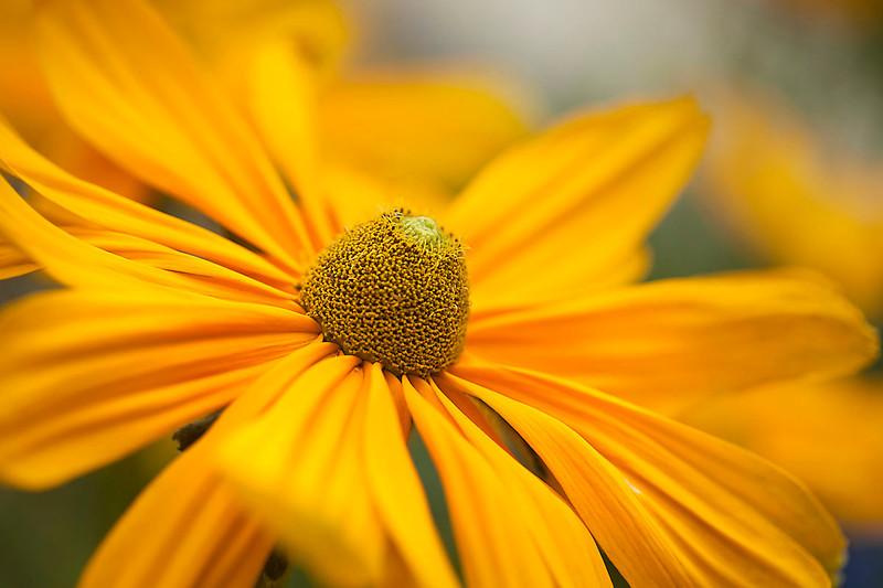 Botanicgarden12-0944.jpg