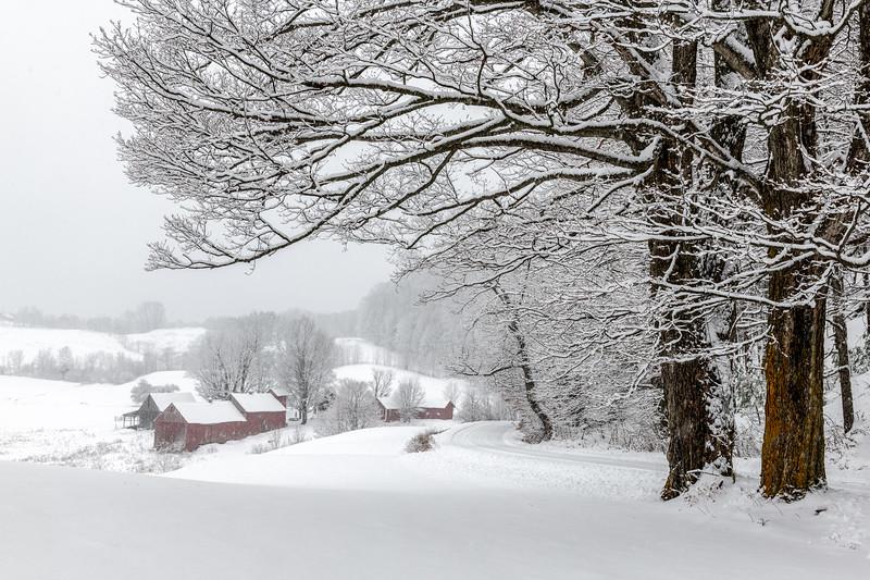 Snowing at Jenne Farm