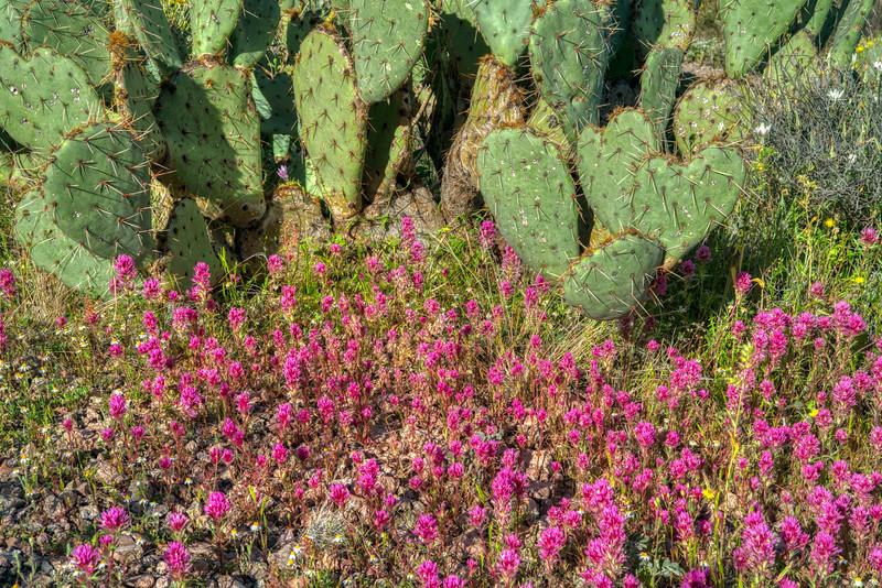 Organ Pipe Cactus 2020-17.jpg