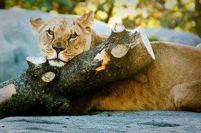Wildlife/Zoo
