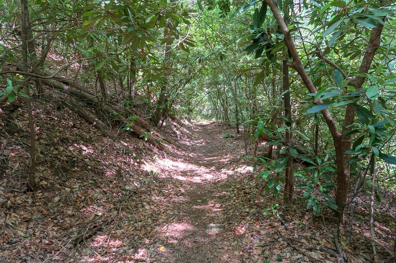 Spencer Branch Trail -- 2,510'