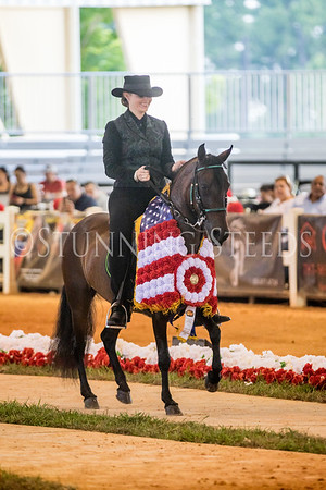 312A-Fino Amateur Mares and Fillies Championship