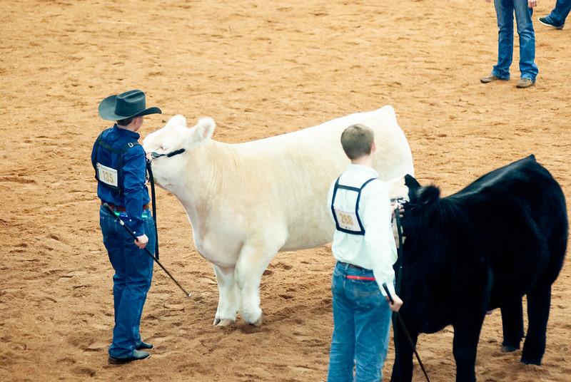 american_royal_cattle-25.jpg