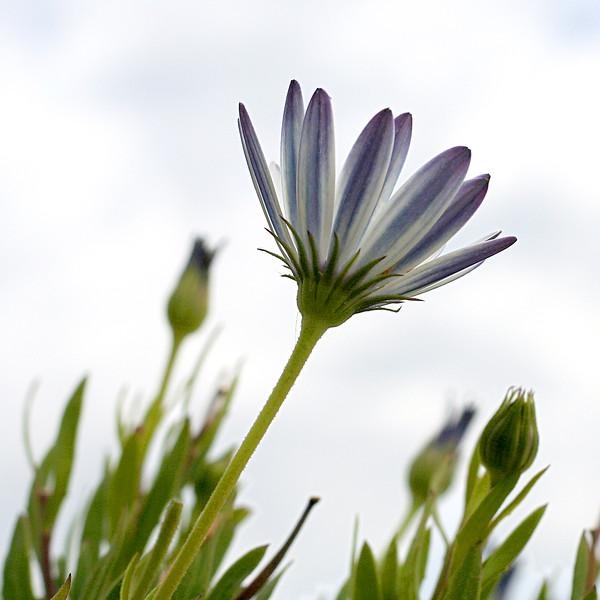 4836 Blue Flower.jpg