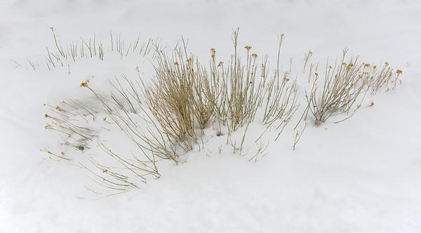 Death Valley Spring