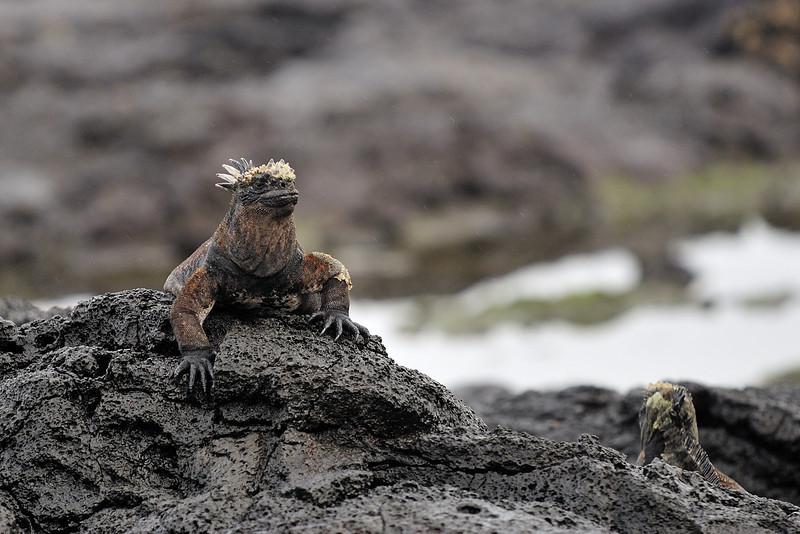 Galapagos Jul 2008 040.JPG