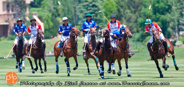 Polo Pony Action Shots