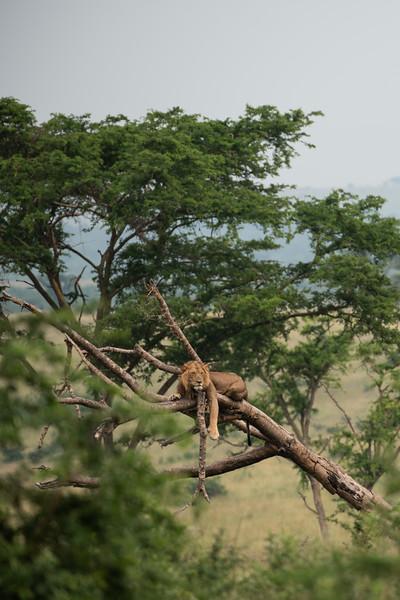 Uganda_T_QE-1148.jpg
