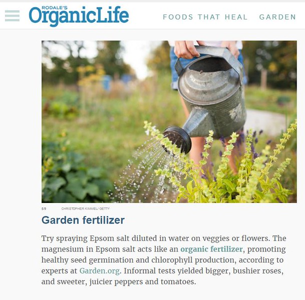 OrganicLife.JPG