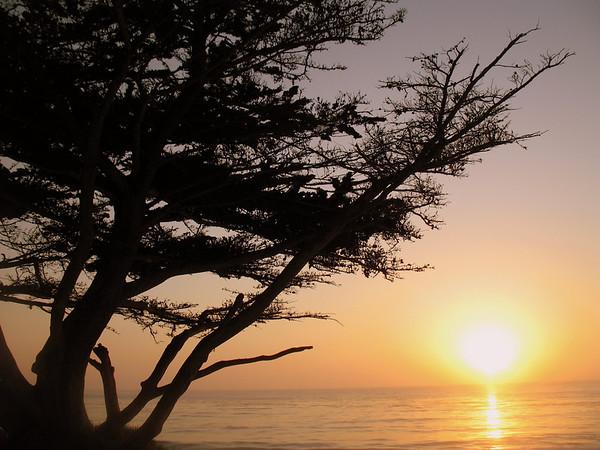 Monterey Peninsula 2006