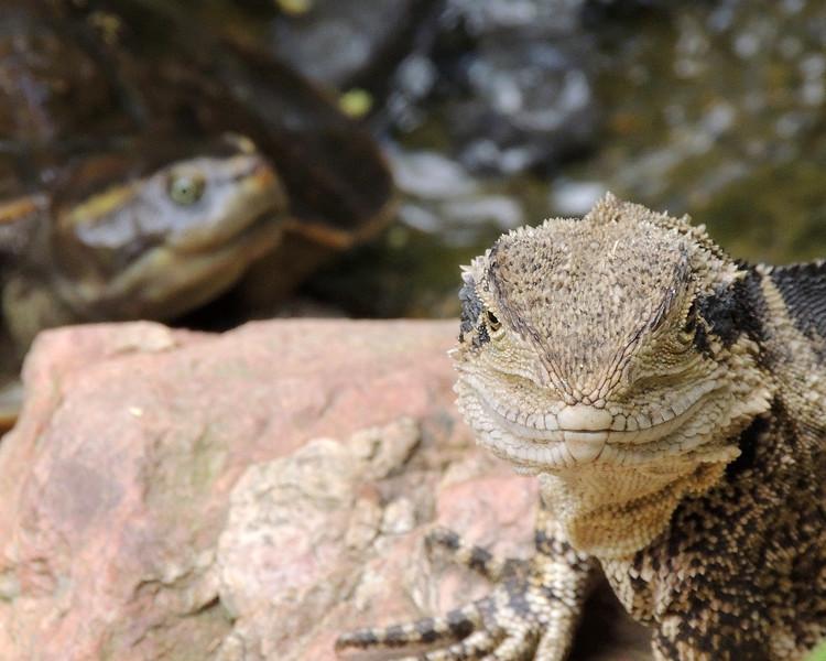 Cairns Tropical Zoo 114 N.jpg