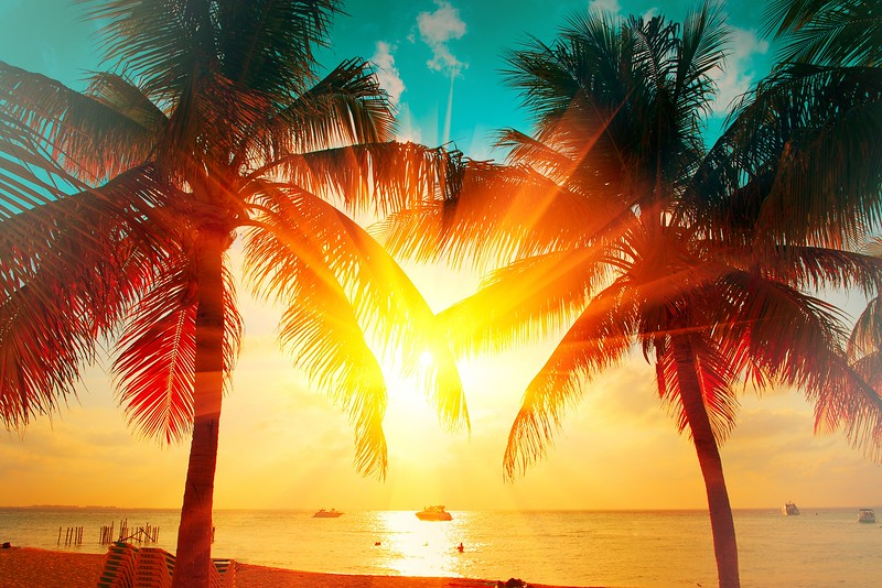 Sunset beach with tropical palm tree over beautiful sky. Palms and beautiful sky background. Tourism, vacation concept backdrop. Palms silhouettes over orange sun
