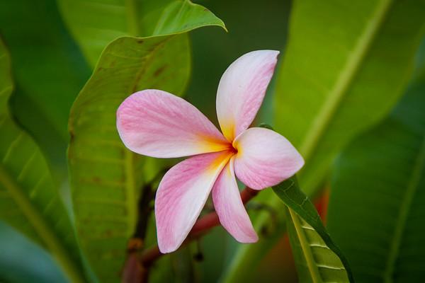 Anguilla Flowers 2019