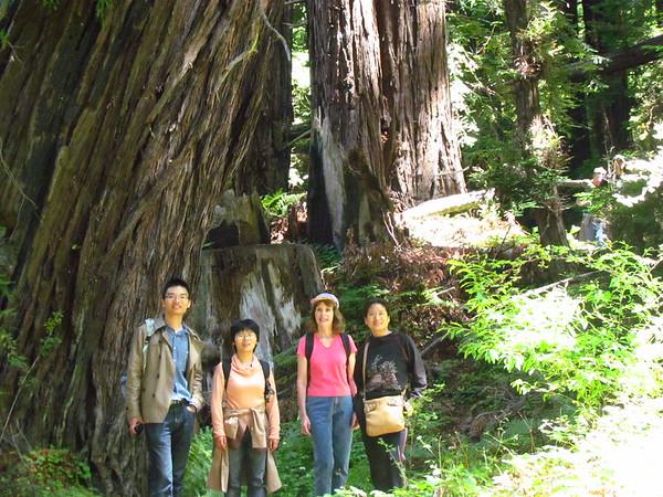 Soberanes Redwood Forest - 7/28/2012