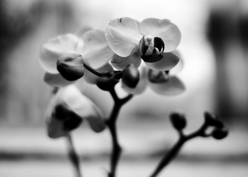KoRedfield-Floral25.jpg