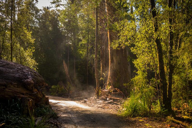 Tasmania-39.jpg