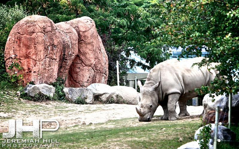 """""""Rhino"""", Toronto Zoo, 2013 Print JP13-99-317"""