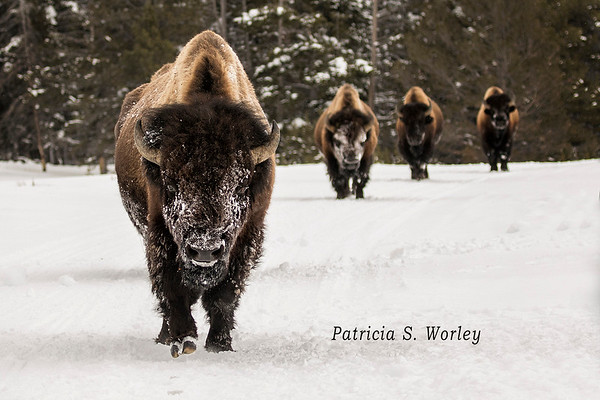 2020 Winter in Yellowstone Photography Workshop