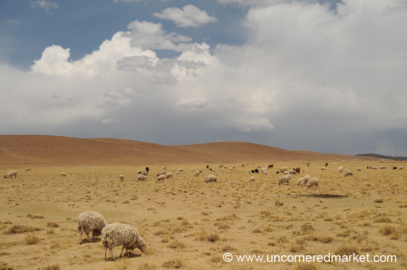 Lunch Break - Salar Tour, Bolivia