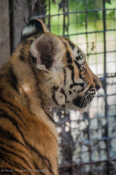 zoo_july_2012-22.jpg