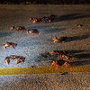 Why did the crabs cross the road?