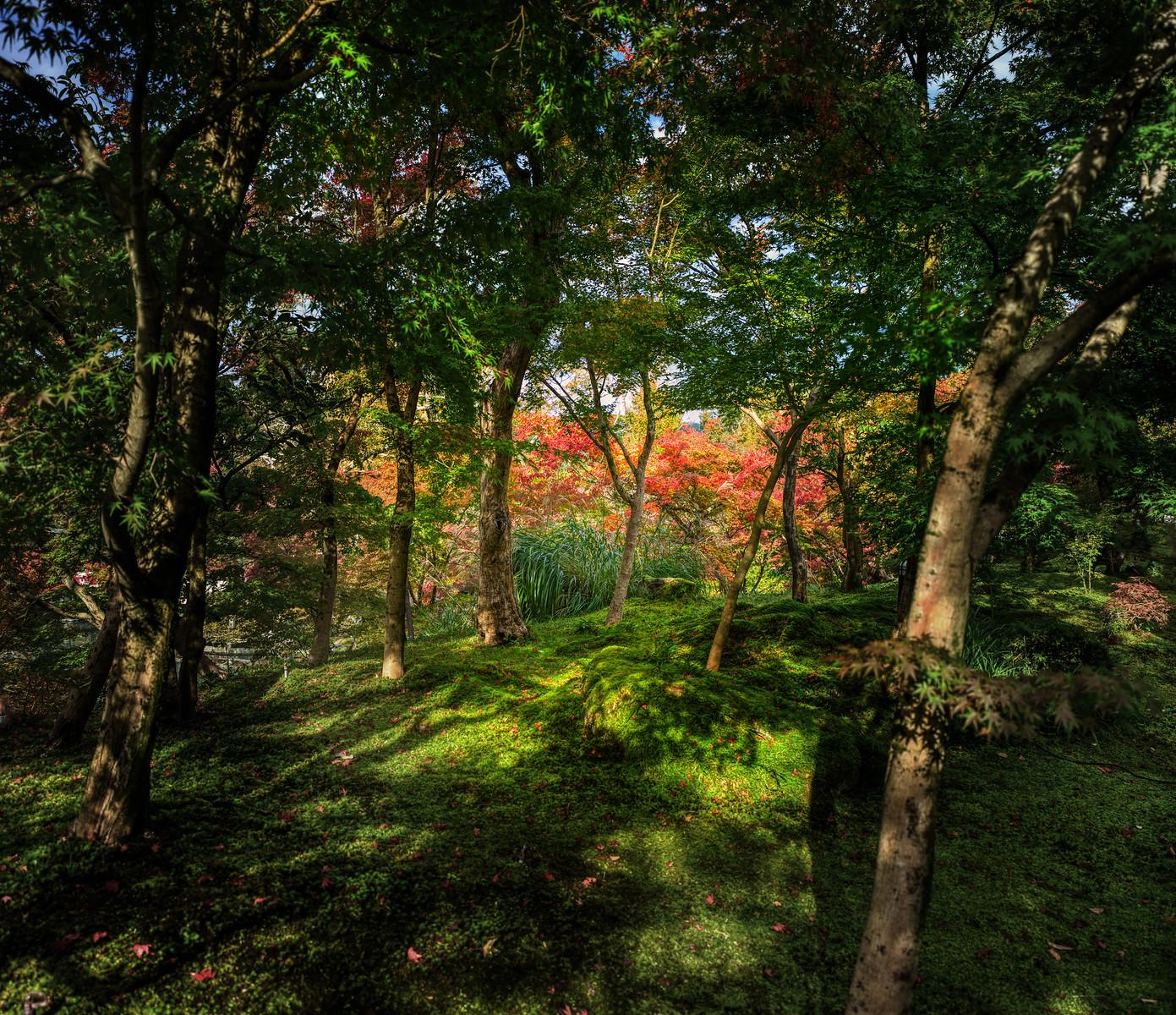A Stroll Through a Garden in Kyoto