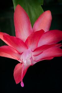 _DSC8302_cactus