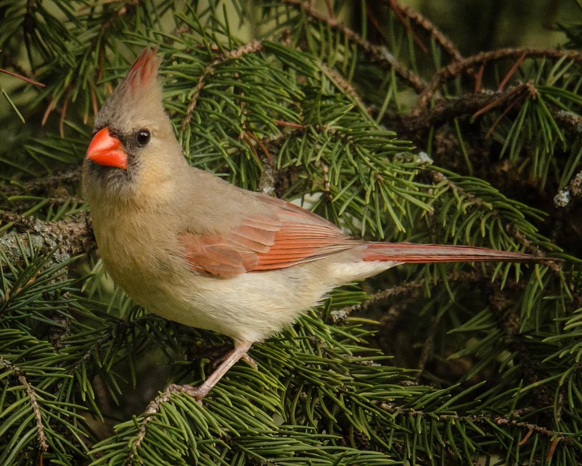 0025 - Cardinals 5-16-13 (15 of 41)-Edit-Edit