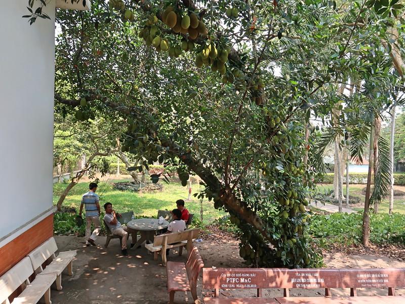 IMG_3627-jackfruit-tree.jpg