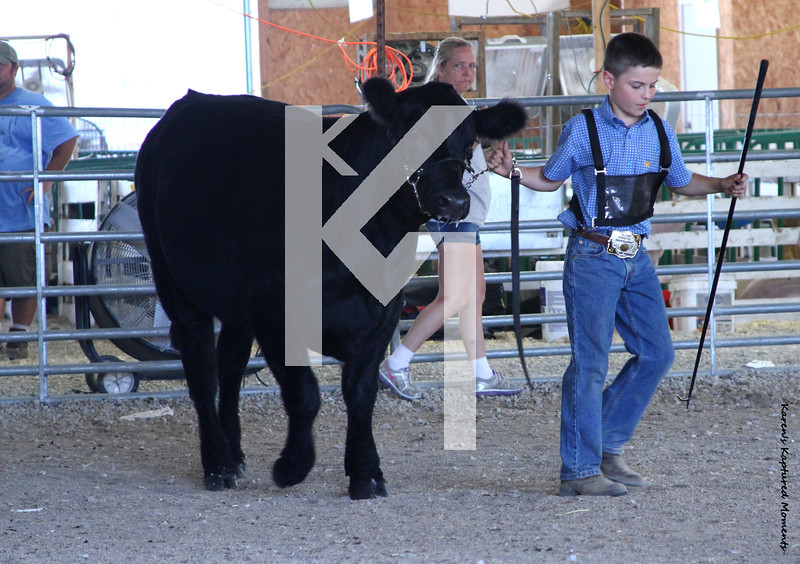 2012 Clinton County - Cattle