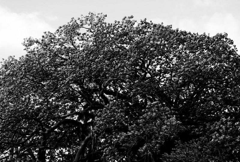 Lord Howe20080508 142828.jpg