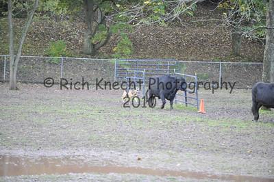 Del-Bay Herding Trial October 15-16