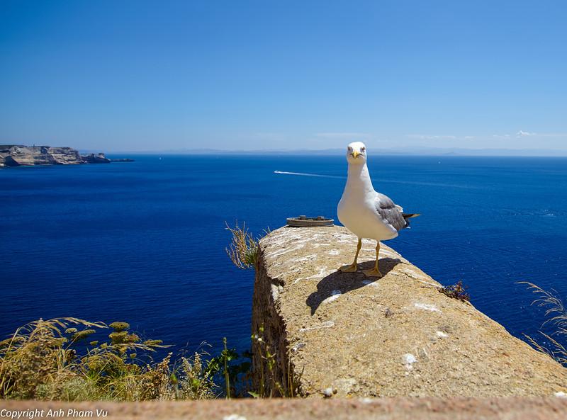 Uploaded - Corsica July 2013 195.jpg