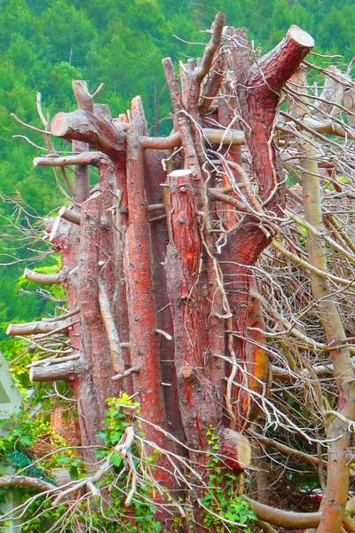 Trees in Crosskeys~0143-1.