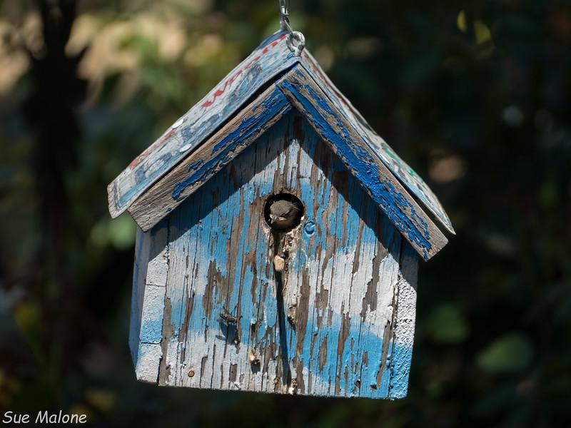 Little Bird in the Bel House-5.jpg