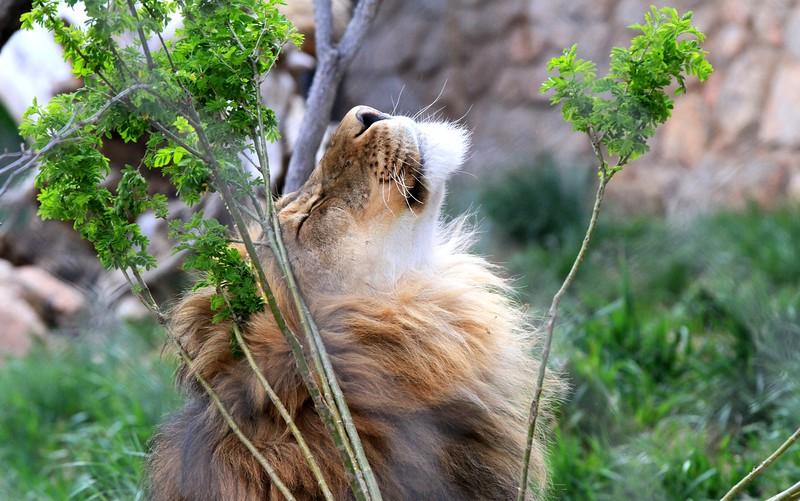 Cheyenne Mtn Zoo (162).JPG