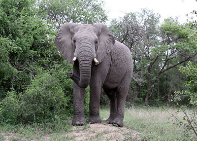 Hluhluwe-iMfolozi Game Reserve - South Africa - 2010