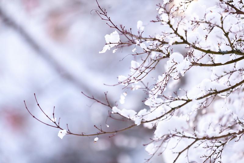 ALoraePhotography_SeniorNight_20190209_30043.jpg