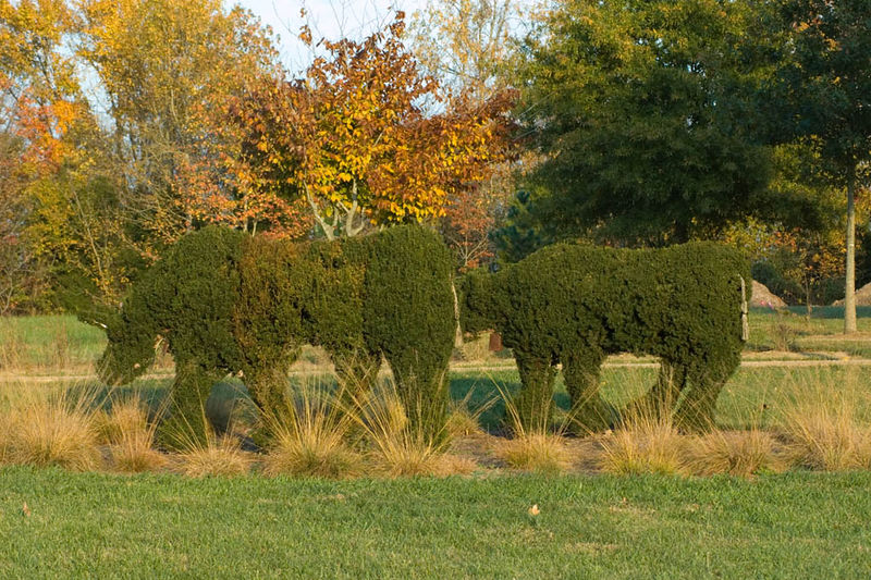 topiary cows