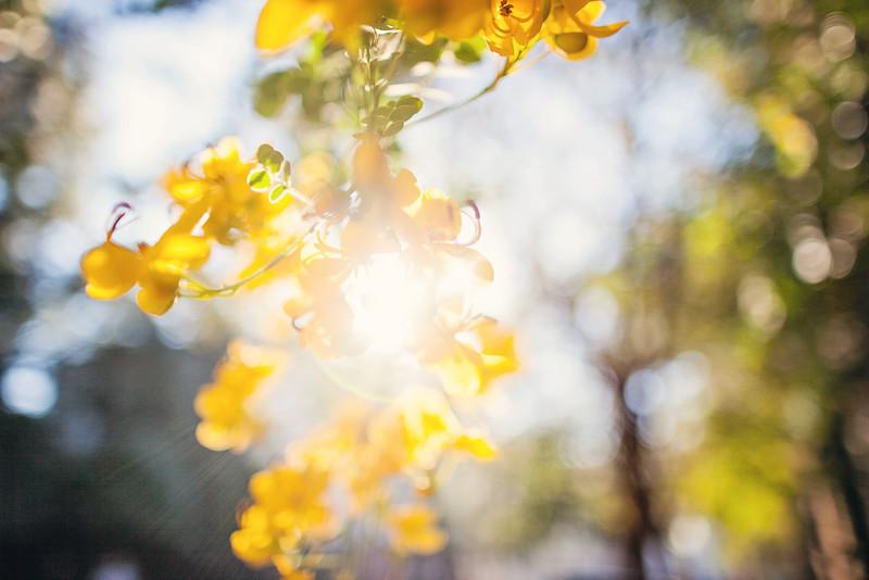 yellow-flowers-4.jpg