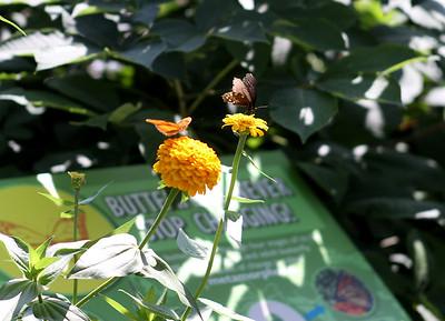 Peck Farm Park Butterfly Garden