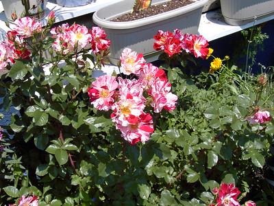 06-08 Garden
