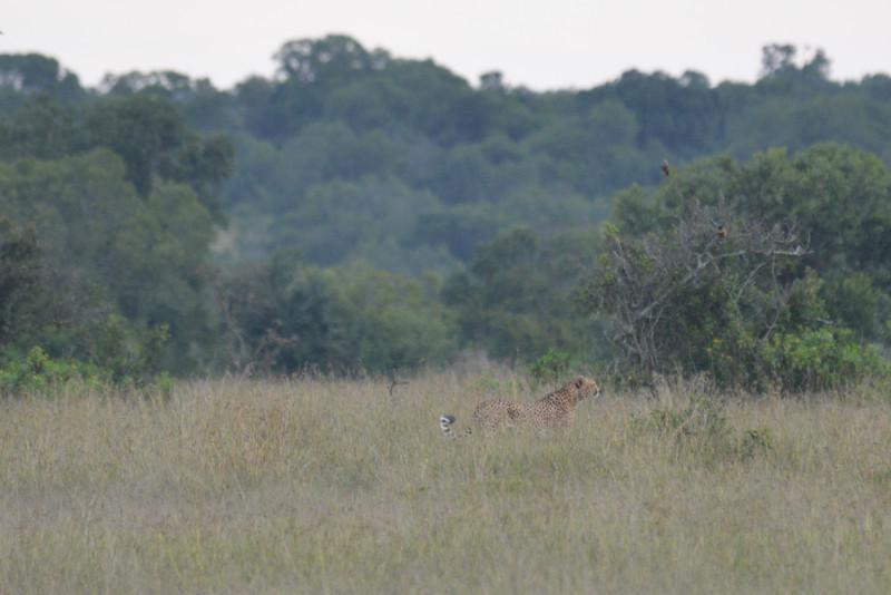 East Africa Safari 36.jpg