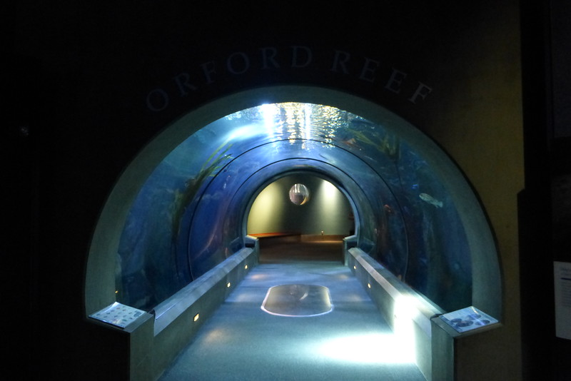 One of three underwater tunnels in the aquarium.