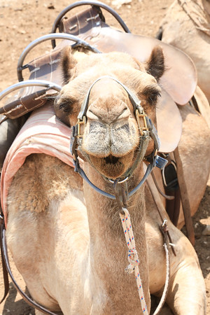 Camel Riding and Dead Sea