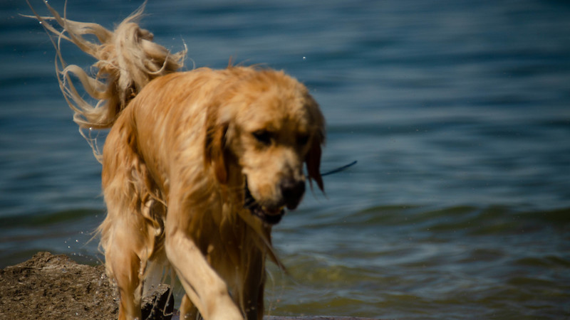 PuppyParty18-477.jpg