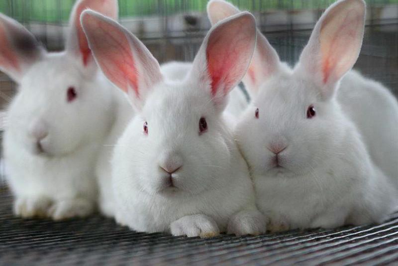 ANI105 Bunny.jpg