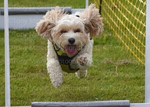 Yorkshire Bouncers Flyball 2019 part 4