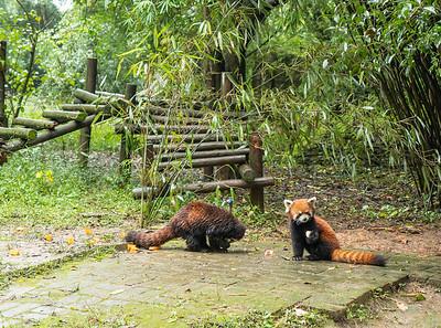 Chengdu-Leshan